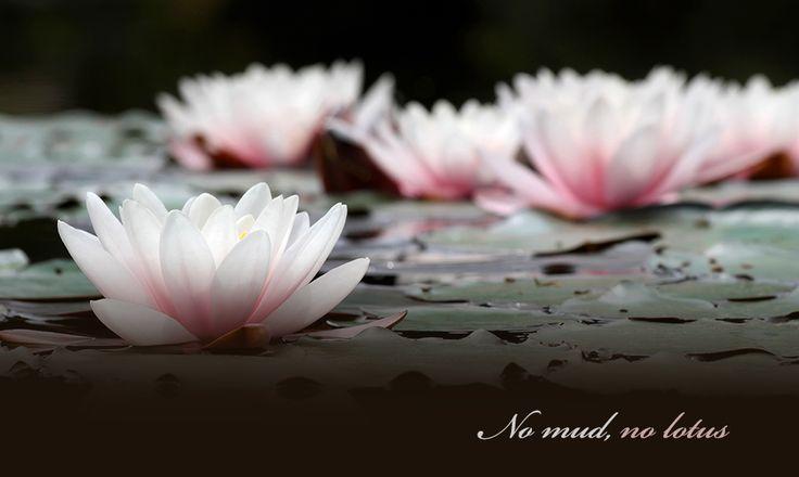 No mud no lotus wag a yoga nomudnolotus mightylinksfo
