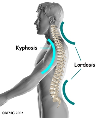 cervical-lordosis-diagram